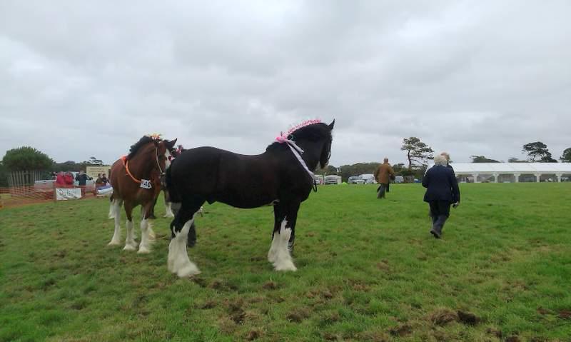 Heavy-horses2